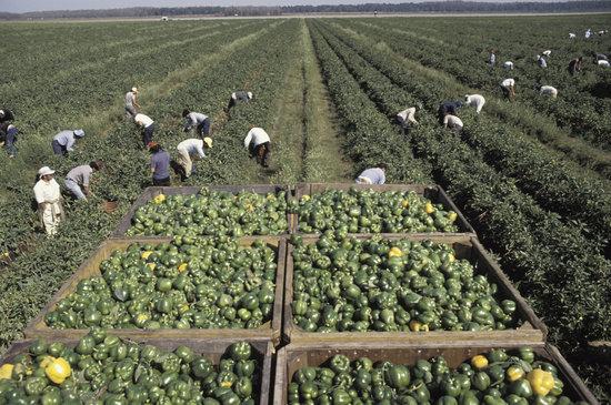 Invitan a Festival para Trabajadores Agrícolas