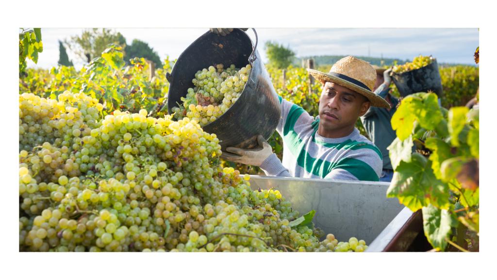 Impacto de la reforma migratoria en los trabajadores agrícolas